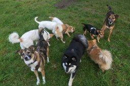Tavia und ihre Gang